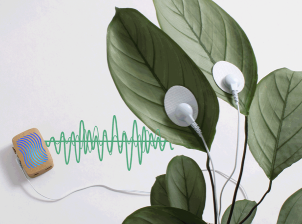 Let Your Plants Play Music  and Gardens of Sound             Will Bloom